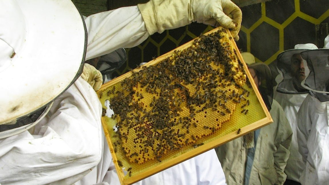 Conférenciers apicoles