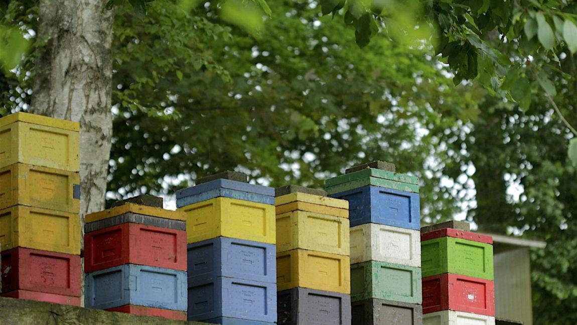 Organisation de l'apiculture wallonne