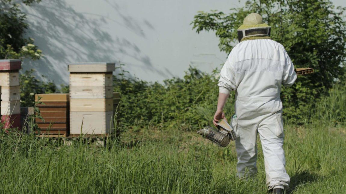 La filière apicole aujourd'hui
