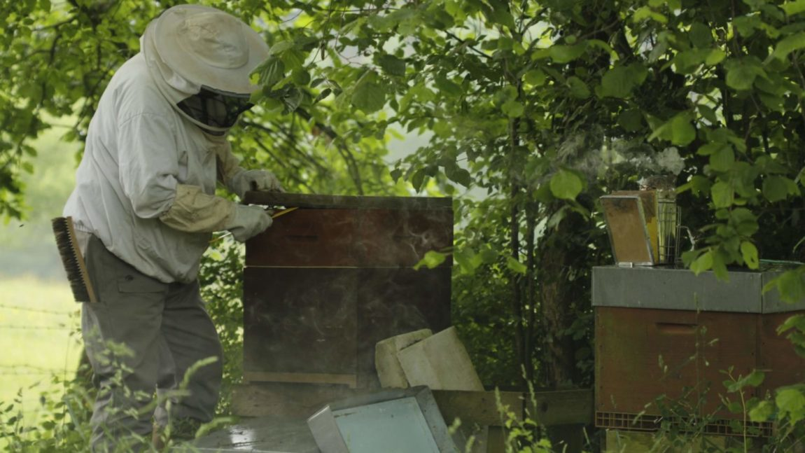 Apiculteurs et ruches